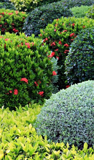 vivero de arbustos ornamentales vivero santa barbara